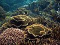 Underwater world, Mabini Batangas - panoramio.jpg