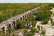Uniek door eb en vloed steeds wisselend kweldergebied. Locatie, Noarderleech Provincie Friesland 23.jpg
