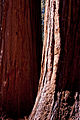 United States - California - Sequoia National Park - 12.jpg
