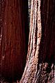 United States - California - Sequoia National Park - 12.jpg