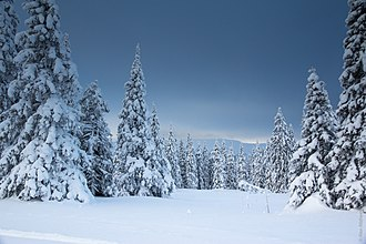 Ural Mountains - Wooded Ural Mountains in winter