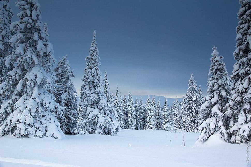 Ural Mountains Winter woods (32035729862)