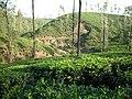 Valparai Hill Station - panoramio (6).jpg