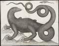 Varanus bengalensis - 1700-1880 - Print - Iconographia Zoologica - Special Collections University of Amsterdam - UBA01 IZ12400055.tif