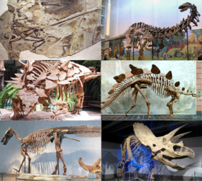 Various dinosaurs2.png