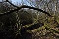 Verschlungene Bäume im Everstenmoor.jpg