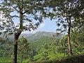 Views around Munnar, Kerala (118).jpg