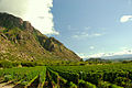 Vineyards near mountains.jpg