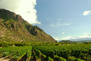 Calchaquí Valleys - Image: Vineyards near mountains