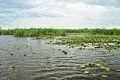Vista desde el bote de la Laguna del Iberá.JPG
