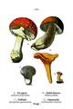 WWB-0266-128-Fungi.png
