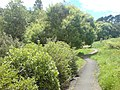 Walking Path Along Oakley Creek I.jpg