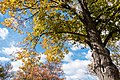 Washburn Fair Oaks Park, Minneapolis (22591784536).jpg