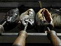 Wasserweltfest 2012 - zum Grillen vorbereitete Steckerlfische.jpg