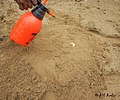 Water spray on sand seedbed.jpg