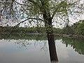 Weiming Lake, Peking University, 2011042208.jpg