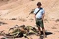 Welwitschia mirablis ^ Neil-1504 - Flickr - Ragnhild & Neil Crawford.jpg
