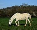 White horse portrait.jpg