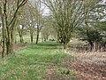 Wild garden - geograph.org.uk - 161646.jpg