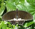 Wilhelma Schmetterling 3.jpg