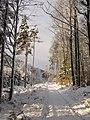 Winter im Teutoburger Wald11.jpg