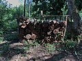 Wood for sale in the UAC botanical garden - 02.jpg