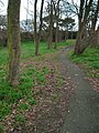 Woodland, Bangor - geograph.org.uk - 1097037.jpg