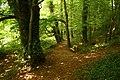 Woodland Path - geograph.org.uk - 897285.jpg