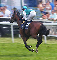 Workforce (horse) at 2010 Epsom Derby.jpg