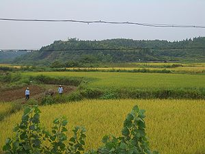 Xianning - Rice fields south of Xianning center city