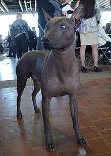 Image Result For Outdoor Dog Kennel