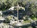 Yucca whipplei stalk 2.jpg
