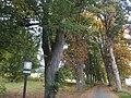 Zelezná Ruda - stromy u hrbitova.jpg
