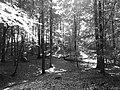 Zoniënwoud - panoramio (1).jpg
