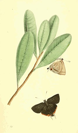 Zoological Illustrations Volume II Plate 69.jpg
