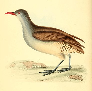 Zoological Illustrations Volume I Plate 19.jpg