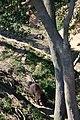 Zoologická zahrada Tábor - Větrovy (49).jpg