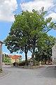 Zwei Eichen in Franzen 2015-06 NDM ZT-083.jpg
