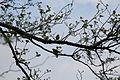 Zwei Vögel in der Mertinger Höll.JPG