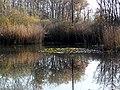 Étang forestier du bois des mouilles, réserve biologique forestière de Bernex - panoramio (1).jpg
