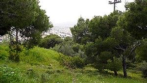 Vrilissia - Vrilissia Suburban Forest