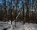 Голосіївський ліс DSC 0112.jpg