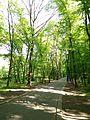 Голосіївський парк 5.jpg