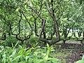 Донецкий ботанический сад 017.jpg
