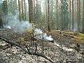 Канельярви- Заходское , низовой пожар 2006 - panoramio.jpg