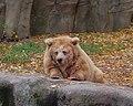 Киевский зоопарк (40).jpg