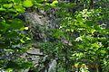 Крізь віття дерев.jpg