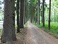 Лісовий дендрарій .Ялинова алея.jpg