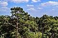 На висоті верхівок дерев.jpg