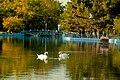 Озеро у парку Перемоги.jpg